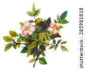 watercolor flowers  isolated on ... | Shutterstock . vector #285981818