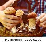 fresh mushrooms in the kid hands | Shutterstock . vector #286031390