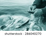 fishers hands take fish out of... | Shutterstock . vector #286040270