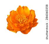 A Globe Flower Orange Flower...