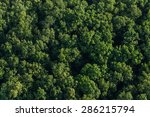 Aerial View Of The Forest In...