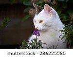 cat smelling a flower | Shutterstock . vector #286225580