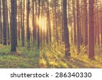 beautiful sunset in the woods ... | Shutterstock . vector #286340330