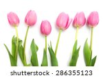 pink tulips isolated on white | Shutterstock . vector #286355123