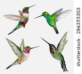 Set Four Small Bird Hummingbird