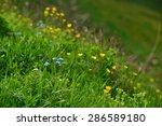 meadow flowers   Shutterstock . vector #286589180