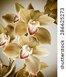 cymbidium orchids | Shutterstock . vector #286625273