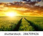 Sunset Over Wheat Fields.