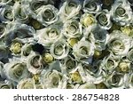 white rose is a great gift for... | Shutterstock . vector #286754828