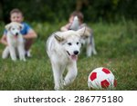 Stock photo boys play with malamutes puppies outdoor portrait 286775180