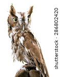 Stock photo  portrait of an eastern screech owl isolated and placed on a white background 286802420