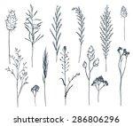 wild flowers clip art... | Shutterstock .eps vector #286806296