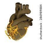human heart | Shutterstock . vector #286989884