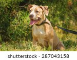 portrait of a puppy on the...   Shutterstock . vector #287043158