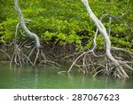 Roots And Branches Mangrove...
