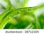 green leaf with drops of water | Shutterstock . vector #28712104