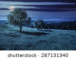 few trees on agricultural meadow with flowers on  hillside near forest at night in full moon light - stock photo