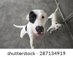 Stock photo shelter dog is a rescue dog waiting and looking for adoption 287134919