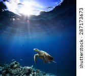 Stock photo underwater wildlife with animals divers adventures in maldives sea turtle floating over beautiful 287173673