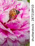 bees and flowers | Shutterstock . vector #287218910