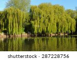 Willow Tree On The Banks Of Th...