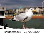 Resting Seagull With The...