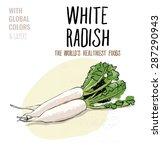white radish. vector... | Shutterstock .eps vector #287290943