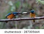 Two Kingfishers On Branch In...