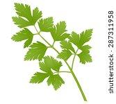 parsley | Shutterstock .eps vector #287311958