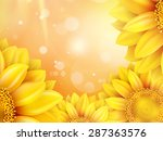 Macro Sunflower Background With ...