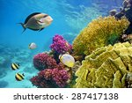Underwater Scene With Coral...