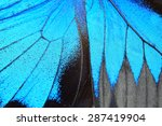 Stock photo blue butterfly wing nature pattern texture background 287419904