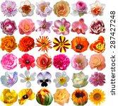 big selection of various... | Shutterstock . vector #287427248