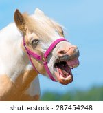 Portrait Of Neighing Horse Wit...