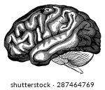 brain hottentot venus  vintage... | Shutterstock .eps vector #287464769