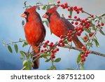 Northern Cardinals On Yaupon...