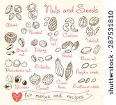 set drawings of nuts and seeds... | Shutterstock .eps vector #287531810