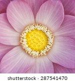 Lotus Flower Close Up