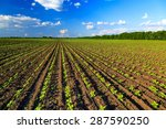 agricultural field | Shutterstock . vector #287590250