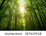 Summer Forest Trees. Nature...