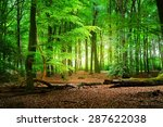 Walkway In A Spring Forest In...
