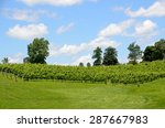 Vineyards Of North Georgia Wine ...