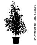 tree  flower benjamin   ficus... | Shutterstock .eps vector #287682698