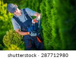Hedge Trimmer Works. Gardener with Gasoline Hedge Trimmer Shaping Wall of Thujas. - stock photo