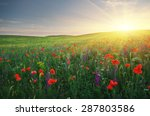 spring meadow of poppies... | Shutterstock . vector #287803586