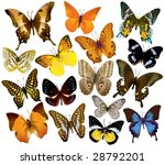 vector butterfly collection   Shutterstock .eps vector #28792201