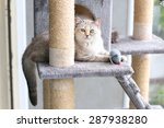 Stock photo a cat is playing with toy on cat house 287938280
