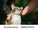 Stock photo man stroking a small kitten 288069503