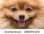 Puppy Pomeranian Dog Cute Pets...