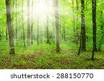 sun beam in a green forest   Shutterstock . vector #288150770